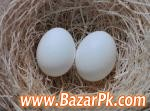 Fertile Parrot Eggs And Weaned Babies For Sale